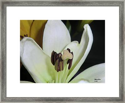Beyond Perfection Framed Print