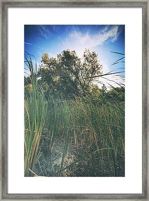 Beyond The Grass Framed Print by Laurie Search
