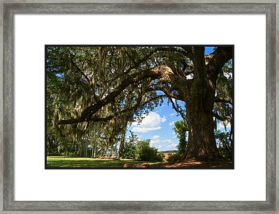 Beyond The Oak                      Framed Print