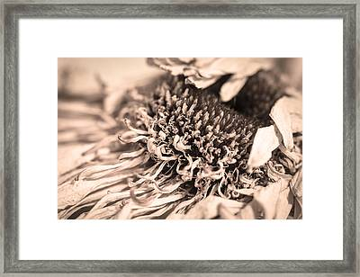 Framed Print featuring the photograph Beyond The Pedals by Steven Santamour