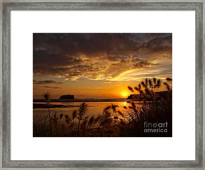 Framed Print featuring the photograph Beyond The Reeds by Trena Mara