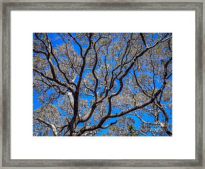 Beyond The Treetops To The Blue Sky Framed Print
