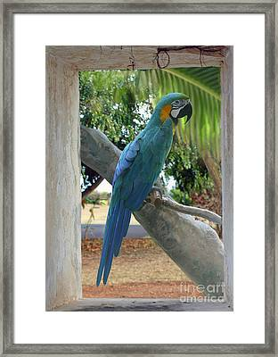 Beyond The Window Framed Print by Bob Hislop