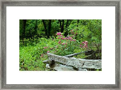 Beyound The Fence Framed Print by Sandra Clark