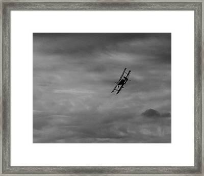 Bi Wing  Framed Print