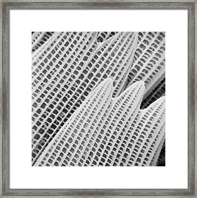 Bia Actorian Butterfly Wing Framed Print by Natural History Museum, London