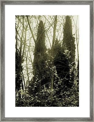Biancospino Framed Print by Sandro Zuffanelli