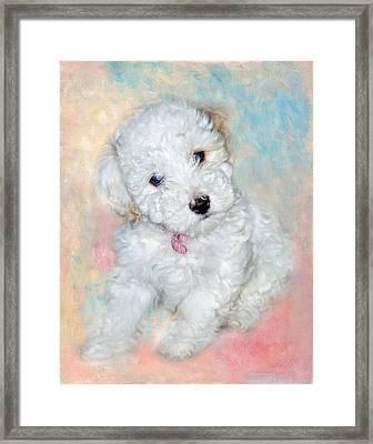 Bichon Maltipoo Puppy Dog Framed Print