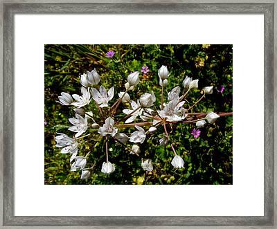 Bicolor Tritella In Park Sierra-ca Framed Print by Ruth Hager
