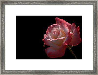 Framed Print featuring the photograph Bashful by Doug Norkum