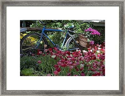 Bicycle In My Garden Framed Print by Ivete Basso Photography