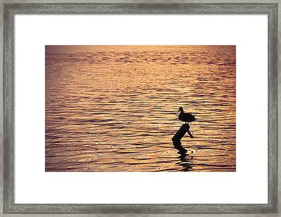Biding Time Framed Print by Nicola Nobile