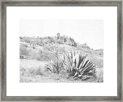 Bidwell Park Cactus Framed Print by Frank Wilson