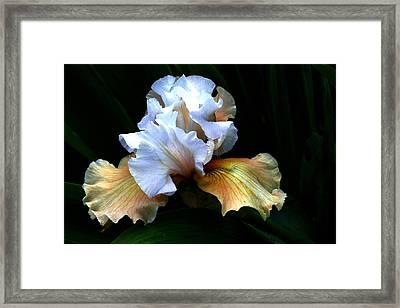 Bifocal Framed Print by Doug Norkum