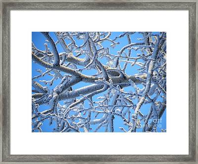 Bifurcations In White And Blue Framed Print by Brian Boyle