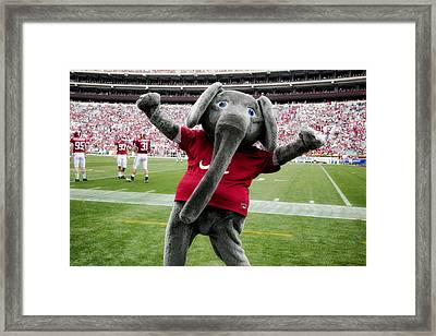 Big Al Framed Print by Mountain Dreams