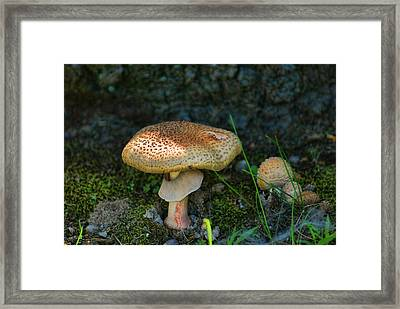 Big And Little Framed Print