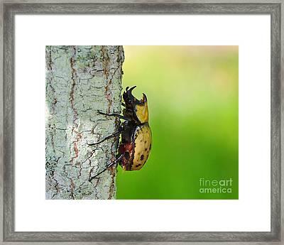 Big Bad Beetle Framed Print