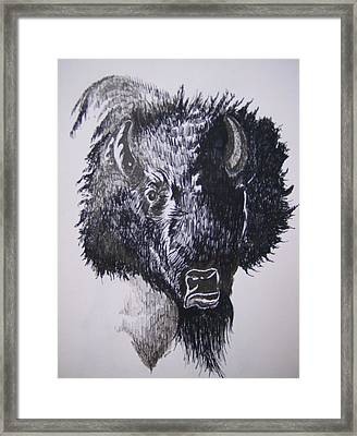Big Bad Buffalo Framed Print