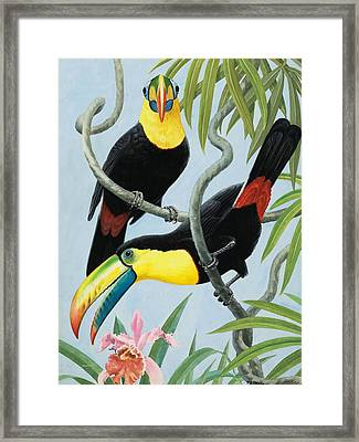 Big-beaked Birds Framed Print by RB Davis