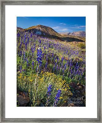 Big Bend Flower Meadow Framed Print by Inge Johnsson