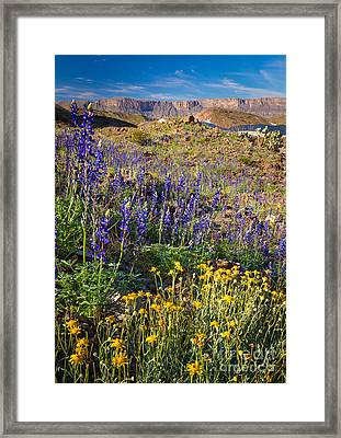 Big Bend Flowers Framed Print