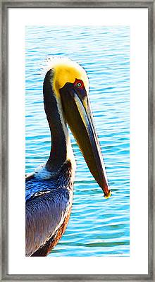 Big Bill - Pelican Art By Sharon Cummings Framed Print