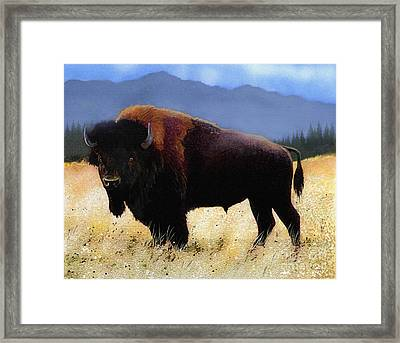 Big Bison Framed Print by Robert Foster