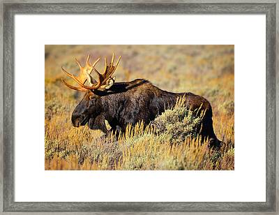Framed Print featuring the photograph Big Boy by Greg Norrell
