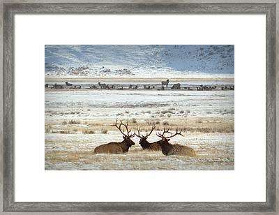 Big Boys Club.. Framed Print