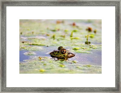 Big Bubba Framed Print by Scott Pellegrin