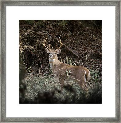 Framed Print featuring the photograph Big Buck by John Johnson