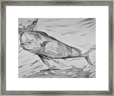 Big Bull Dolphin Framed Print by Edward Johnston