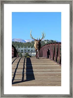 Big Bull On The Bridge Framed Print