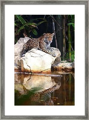 Big Cat Framed Print by Diane Merkle