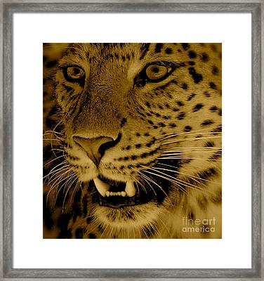 Big Cat In Sepia Framed Print