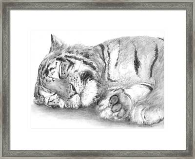 Big Cat Nap Framed Print
