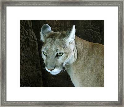 Framed Print featuring the photograph Big Cat by Rhonda McDougall