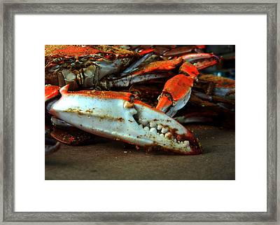 Big Crab Claw Framed Print