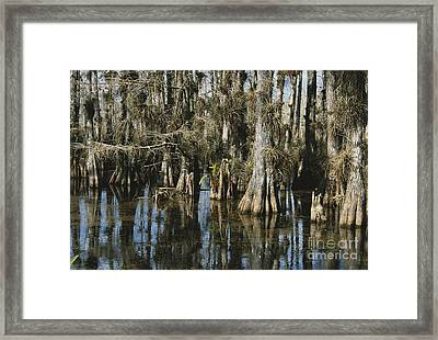 Big Cypress National Preserve Framed Print by Mark Newman