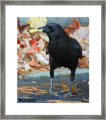Big Daddy Crow Leaf Picker Framed Print