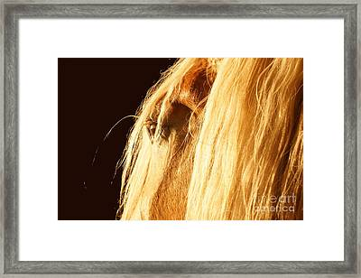 Big Duke Close-up Framed Print by Lynda Dawson-Youngclaus