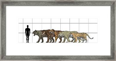 Big Felines Size Chart Framed Print by Vitor Silva