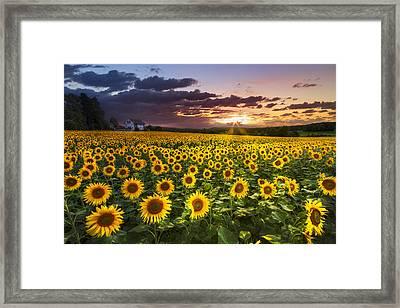 Big Field Of Sunflowers Framed Print by Debra and Dave Vanderlaan