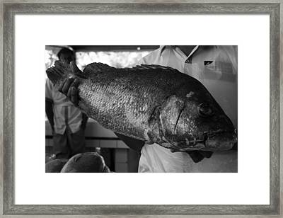 Big Fish Framed Print by Maeve O Connell