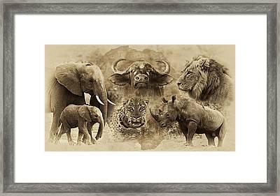 Big Five - Untamed Africa Framed Print by Basie Van Zyl