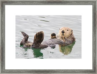 Big Foot Framed Print by Chris Scroggins