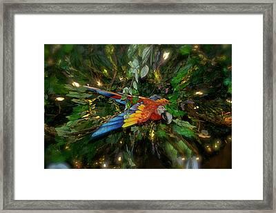 Big Glider Macaw Digital Art Framed Print by Thomas Woolworth