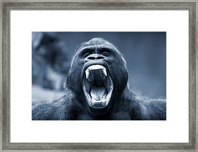 Big Gorilla Yawn Framed Print
