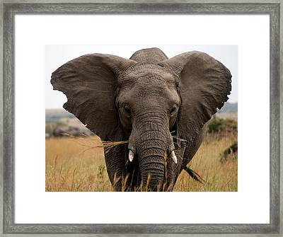 Big Gray Framed Print